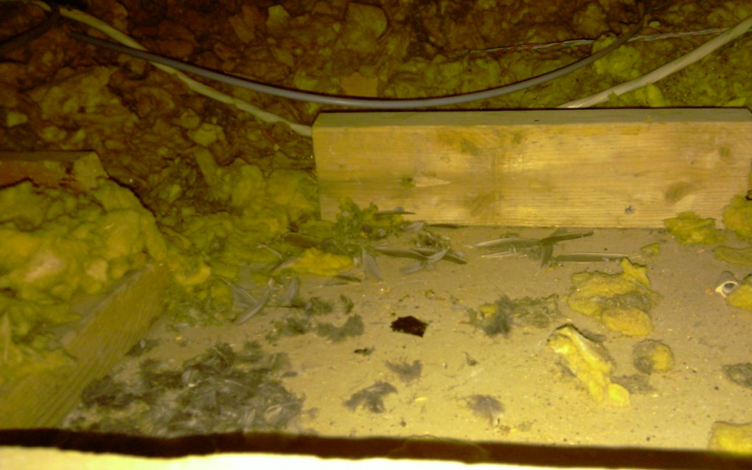 Attic Hatch and Attic Hazards: protecting your castle and your family